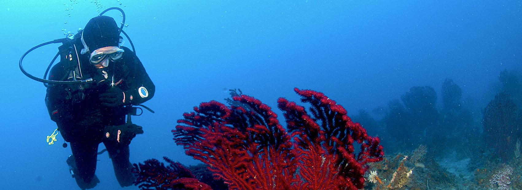 tauchschule diving insel elba nitrox unterkunft und ferienwohnungen